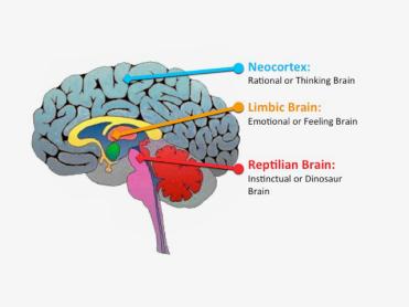 trois cerveaux